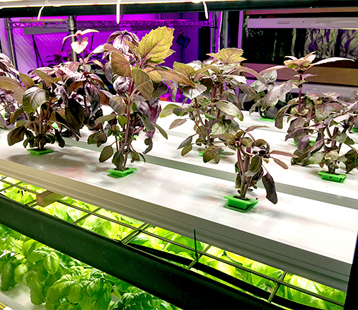 3D打印城市农场