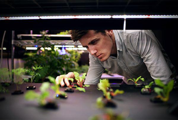 Farmshelf创始人Andrew Shearer